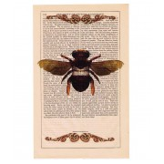 VINTAGE BUMBLE BEE PRINT