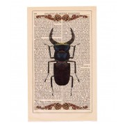 VINTAGE BEETLE PRINT