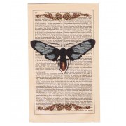 VINTAGE MOTH PRINT