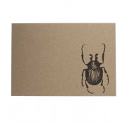 BEETLE NOTECARD